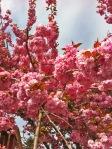 vancouverspringflowers