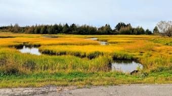 Marsh at Isle Madame