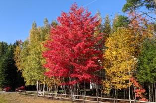 Trim-Colour Trees
