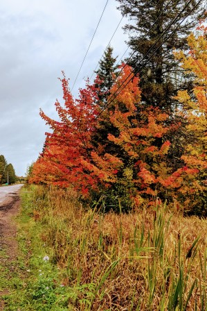 Fall colours out