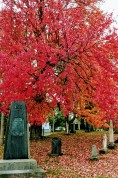 Elmwood Cemetery colours