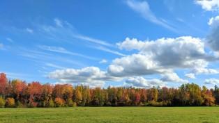 Colourful Treeline