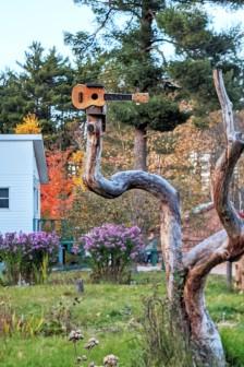 """ Uke "" tree"