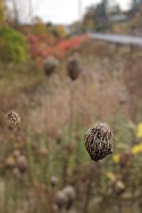 NB Weeds