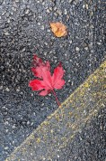 Love this red red leaf