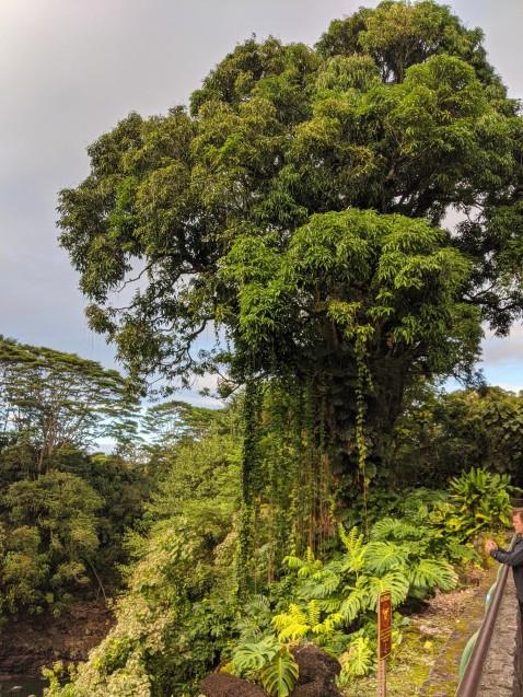 Tree near Falls