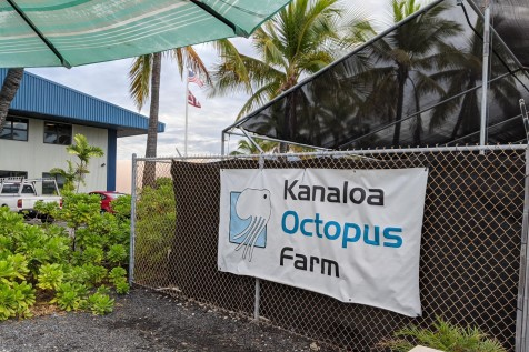 The Kona Octopus Farm !