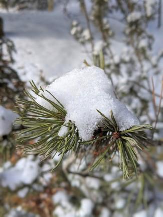 SnowonBranch