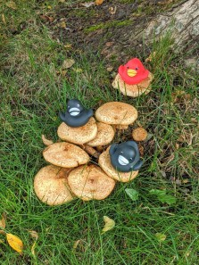 DuckMushrooms